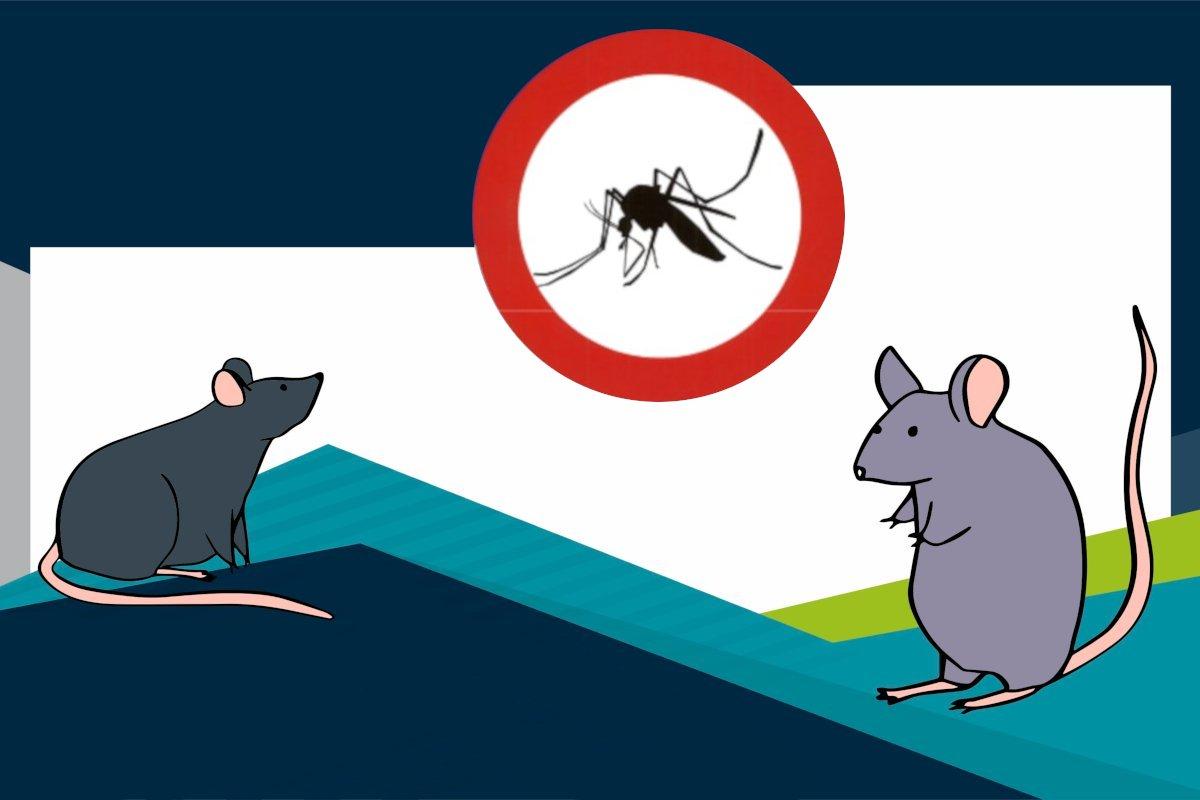 Promocija zdravlja – zaštita od glodavaca i komaraca