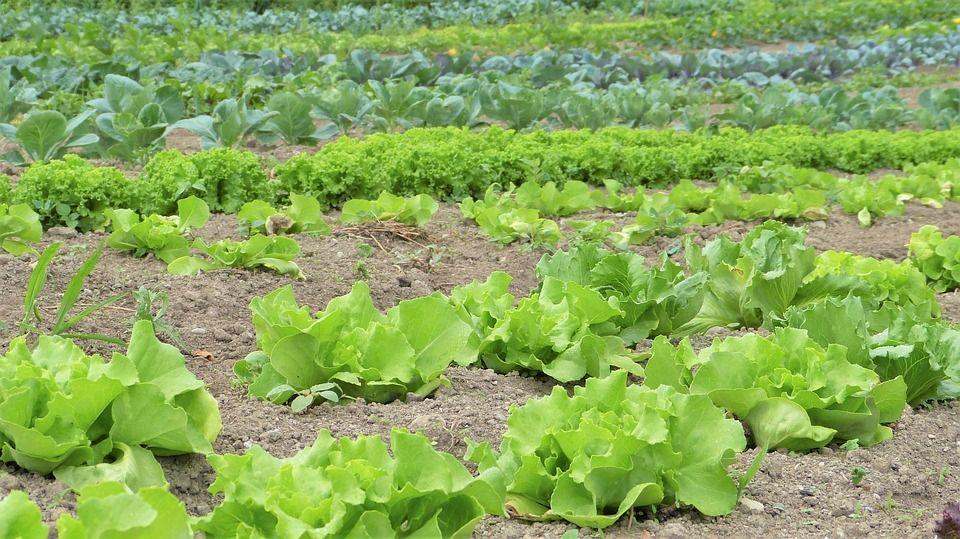 Obavijest poljoprivrednicima - edukacija